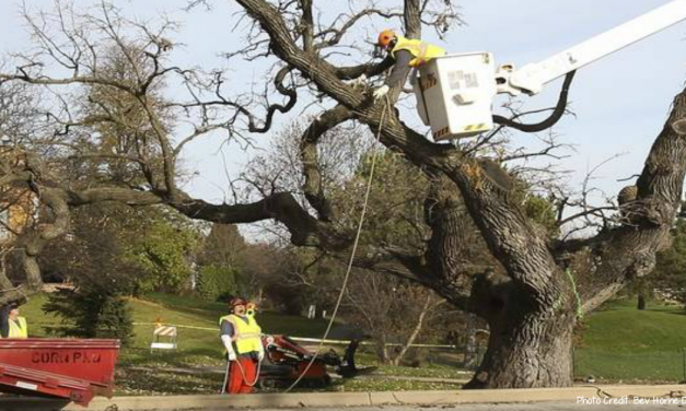 Naperville foundation relaunching Hobson Oak project