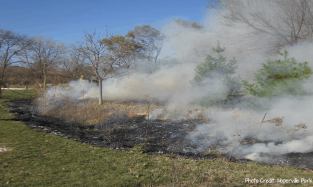 Naperville Park District to conduct seasonal controlled burns